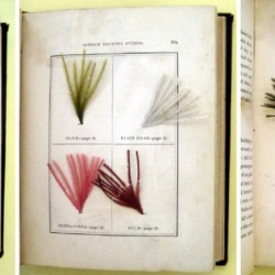 Sample pages of dyed ostrich feathers