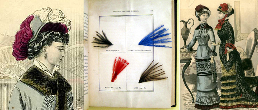 Dyed feather samples and fashion plates from Peterson's Magazine.